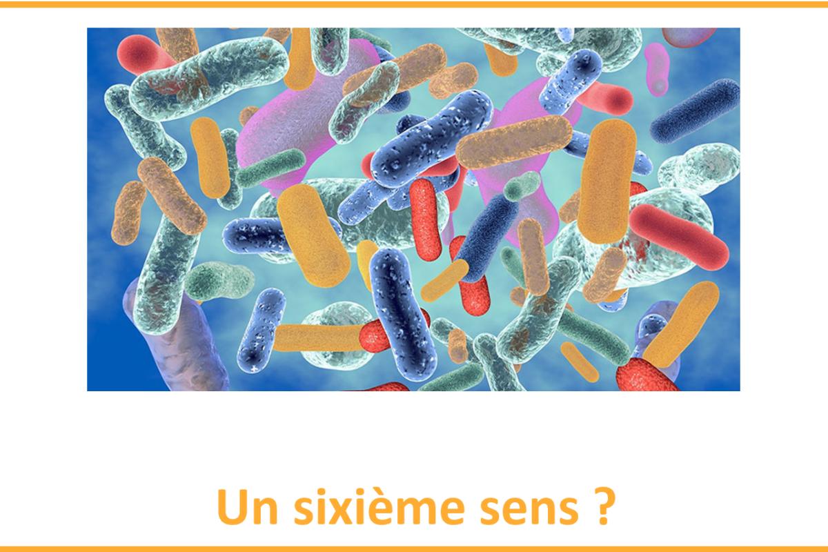 Le microbiote serait le sixième sens